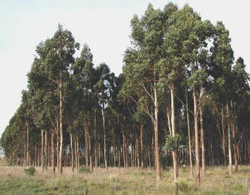 CESAM project highlighted in Expoforest 2014