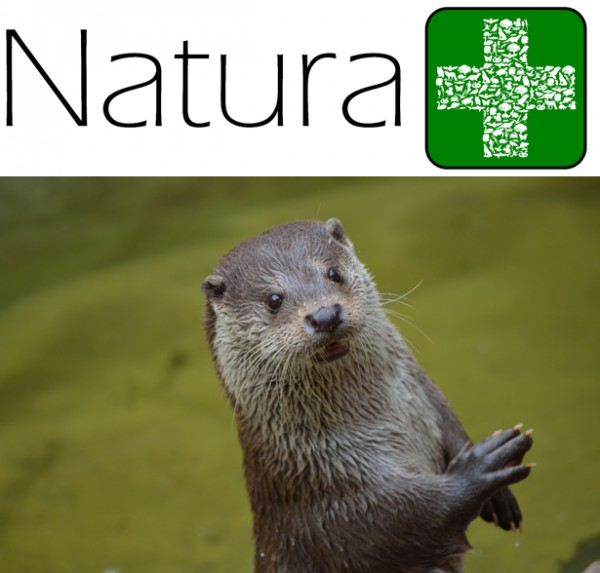 Natura +: A citizen science project to monitor Natura 2000